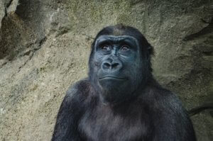 Brilliant Jerks don't need to act like apes
